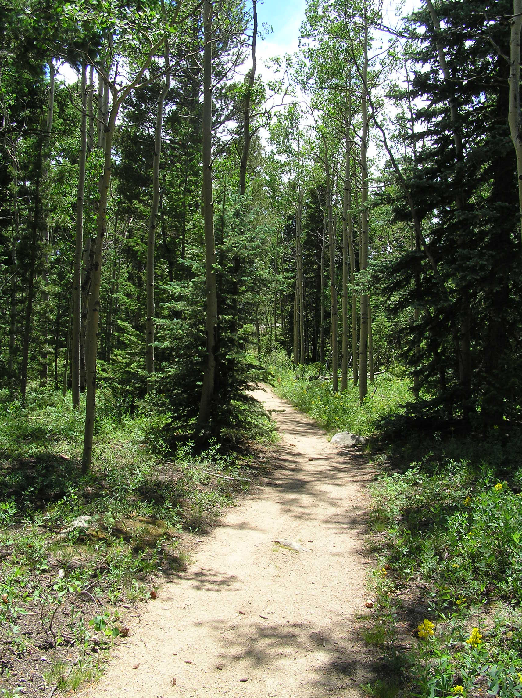 Top ten health benefits of hiking | Have fun. Stay safe ...